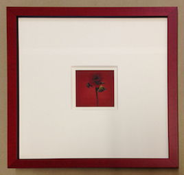 framed Rose - image by Harold Joe Waldrum